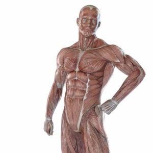 小さな筋肉、大きな筋肉